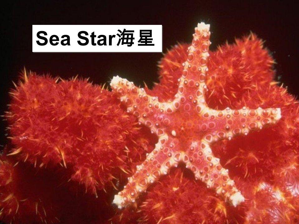 Sea Star 海星