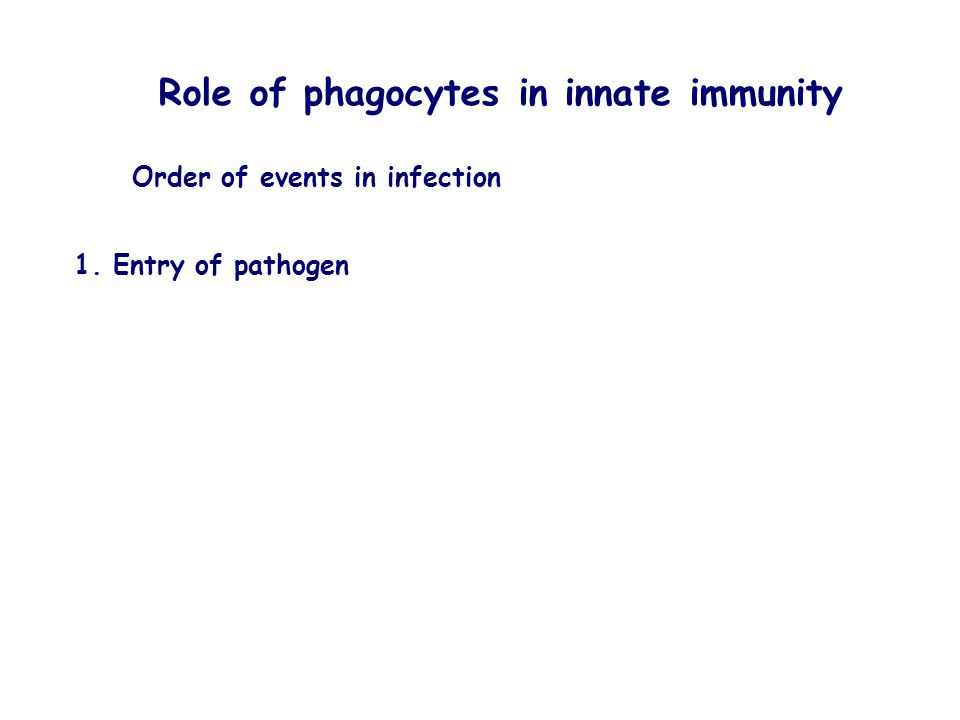 Role of phagocytes in innate immunity Order of events in infection 1. Entry of pathogen