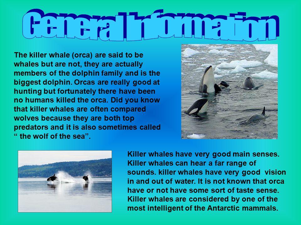 Killer whales have very good main senses. Killer whales can hear a far range of sounds.