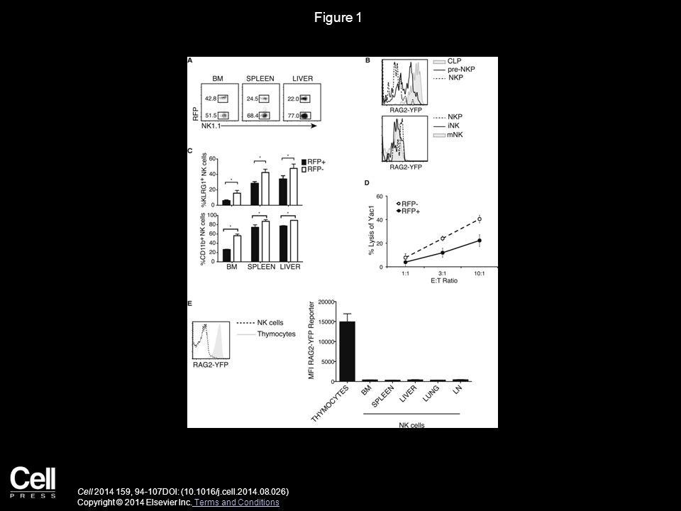 Figure 1 Cell 2014 159, 94-107DOI: (10.1016/j.cell.2014.08.026) Copyright © 2014 Elsevier Inc.