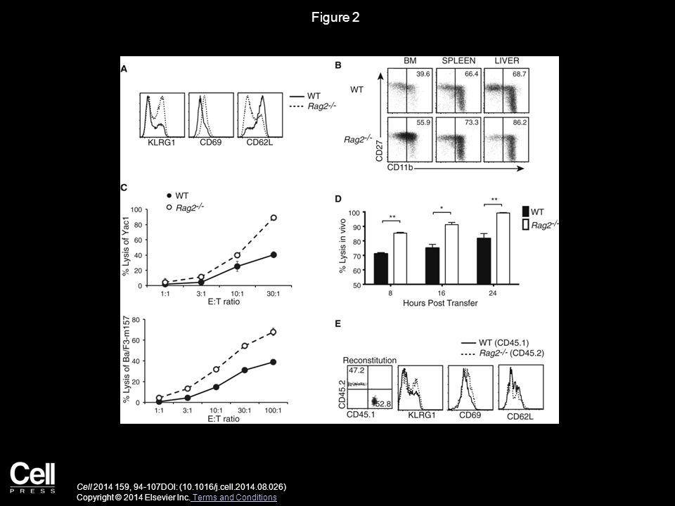 Figure 2 Cell 2014 159, 94-107DOI: (10.1016/j.cell.2014.08.026) Copyright © 2014 Elsevier Inc.
