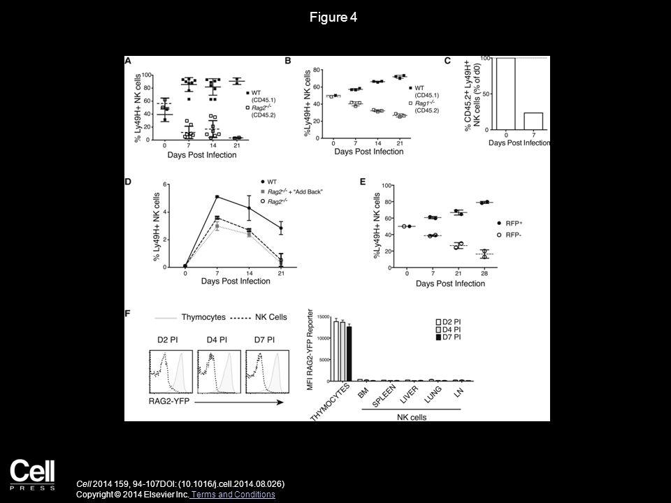 Figure 4 Cell 2014 159, 94-107DOI: (10.1016/j.cell.2014.08.026) Copyright © 2014 Elsevier Inc.