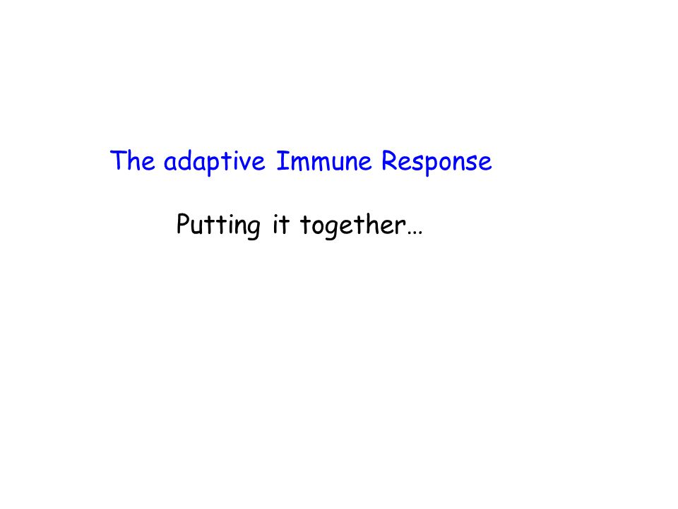 The adaptive Immune Response Putting it together…