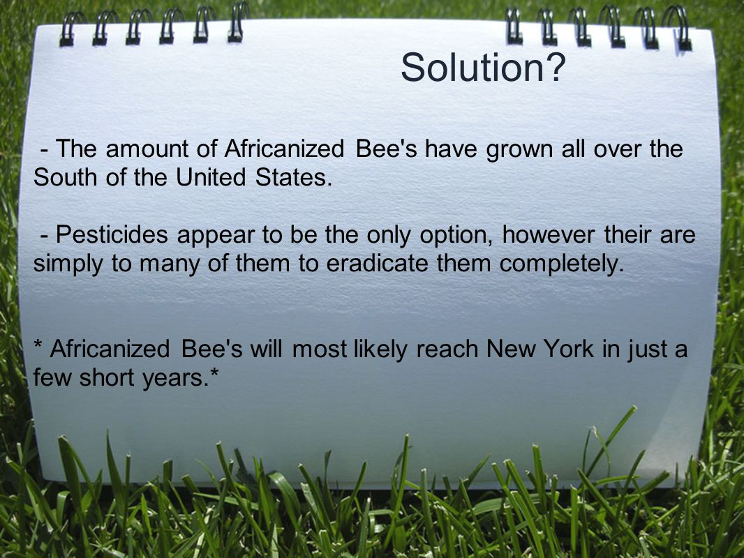 Solution. - The amount of Africanized Bee s have grown all over the South of the United States.