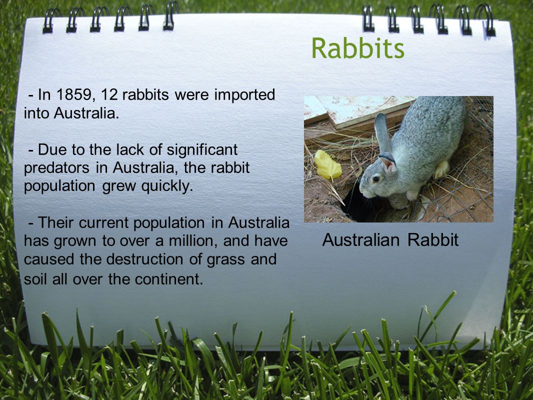 Rabbits - In 1859, 12 rabbits were imported into Australia.