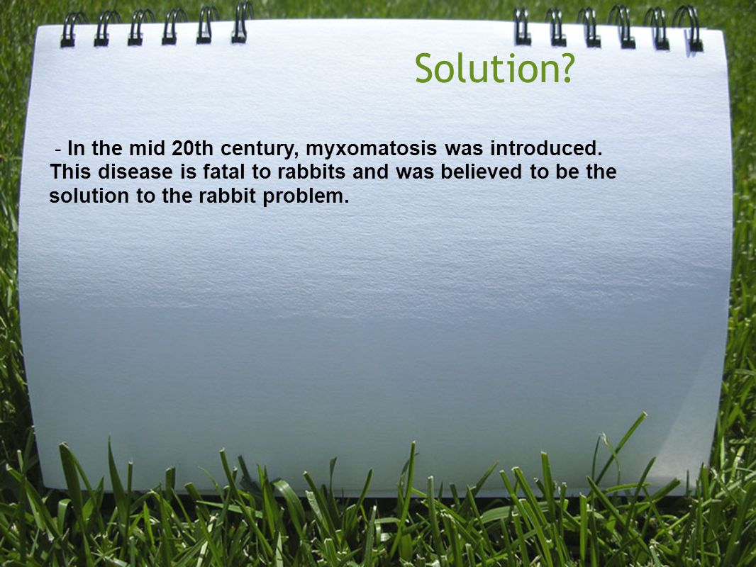 Solution? - In the mid 20th century, myxomatosis was introduced. This disease is fatal to rabbits and was believed to be the solution to the rabbit pr