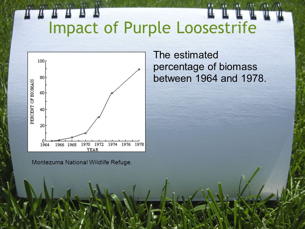 Impact of Purple Loosestrife The estimated percentage of biomass between 1964 and 1978. Montezuma National Wildlife Refuge.