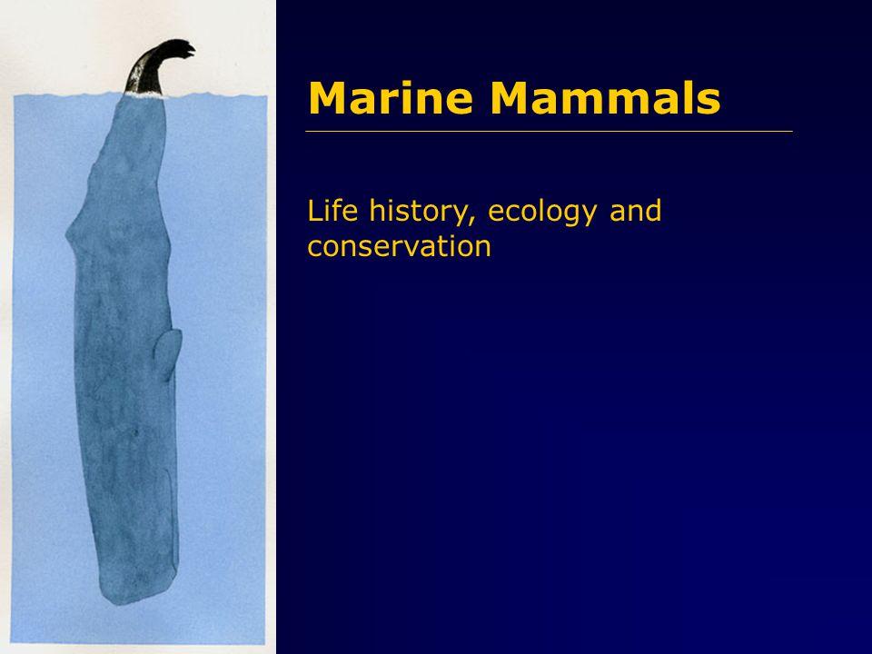 Not easily distinguishable.... female male navelanusgenital slit mammary slit