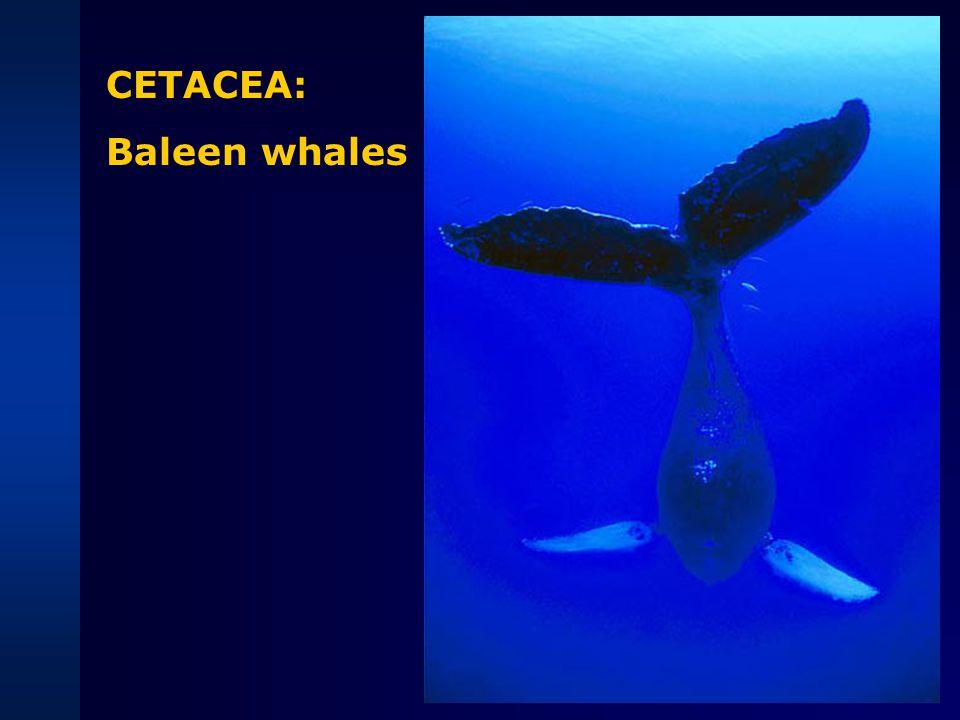 ...Sperm whale DNADNA