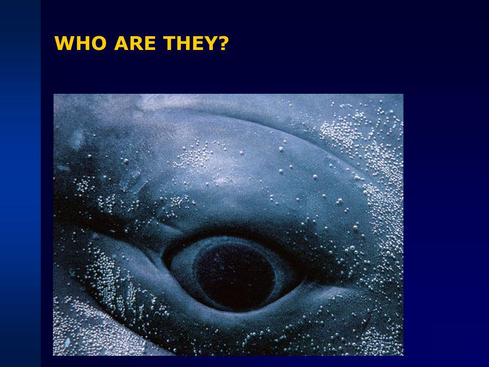 CARNIVORA: Pinnipeds Otariidae sea lions, fur seals, etc Phocidae true seals