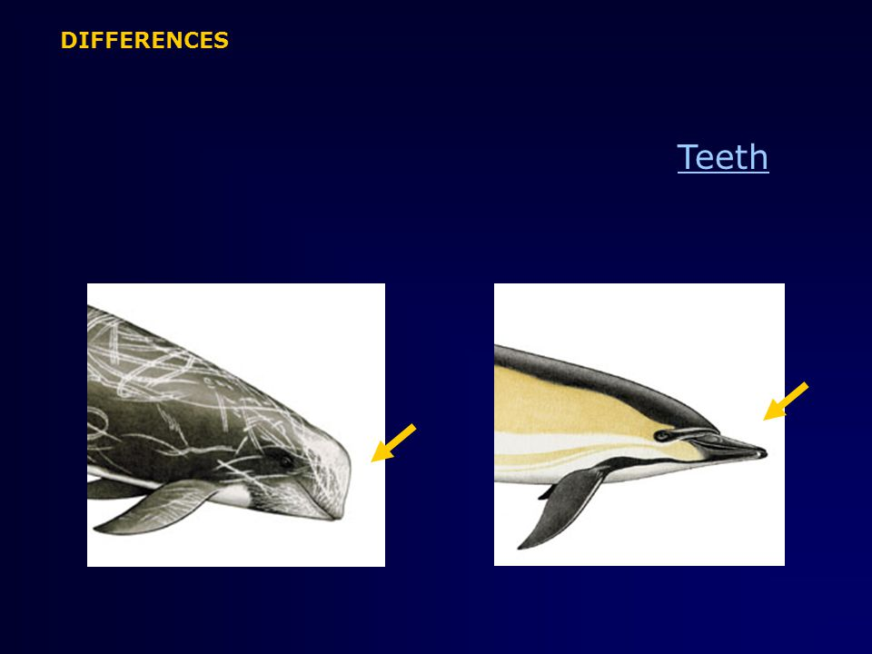 Teeth DIFFERENCES