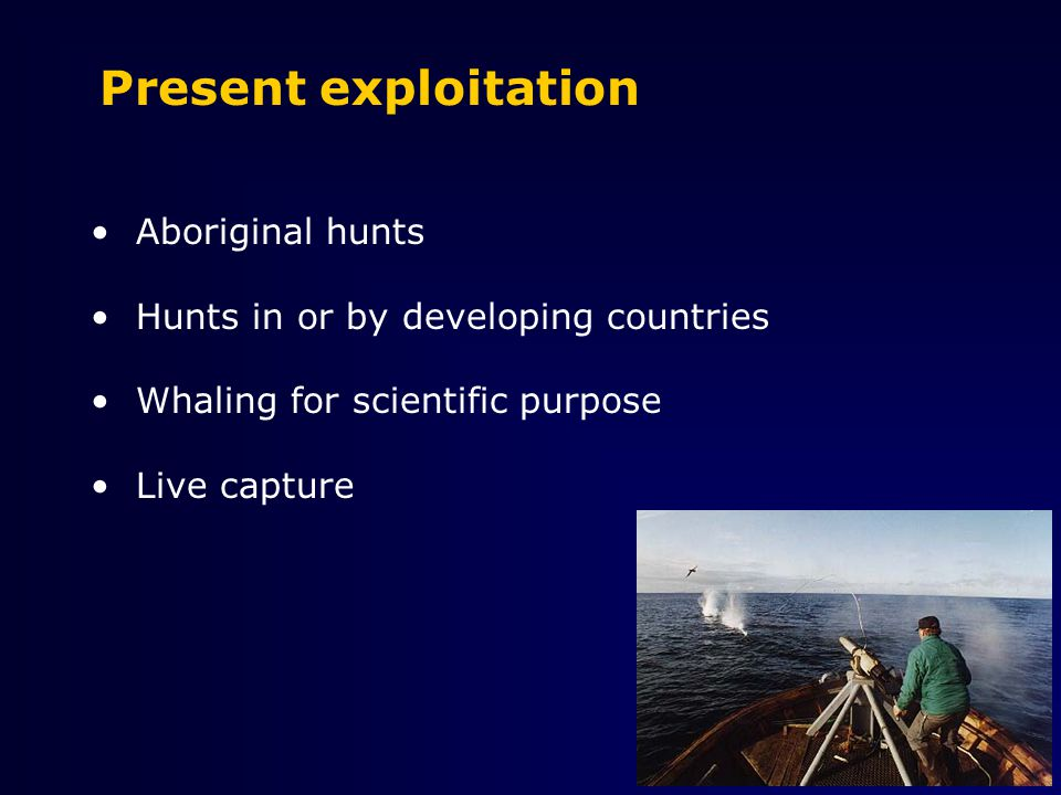Worldwide threats to cetaceans WHAT ARE THE MOST IMPORTANT ANTHROPOGENIC THREATS TO MARINE MAMMALS