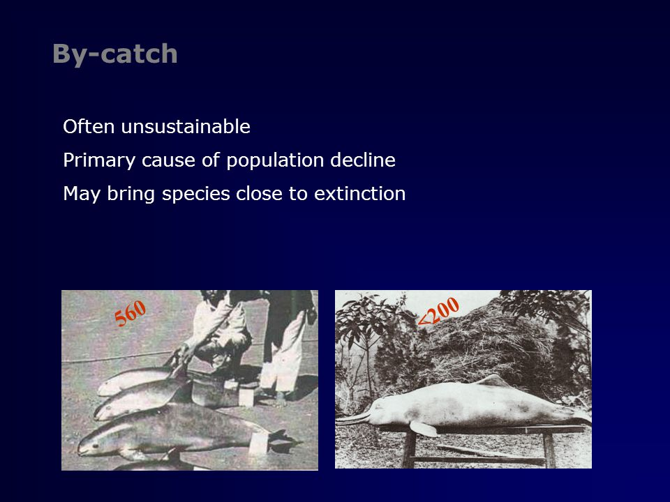 By-catch It refers to the incidental capture of non-target species in fisheries (Whitehead et al.