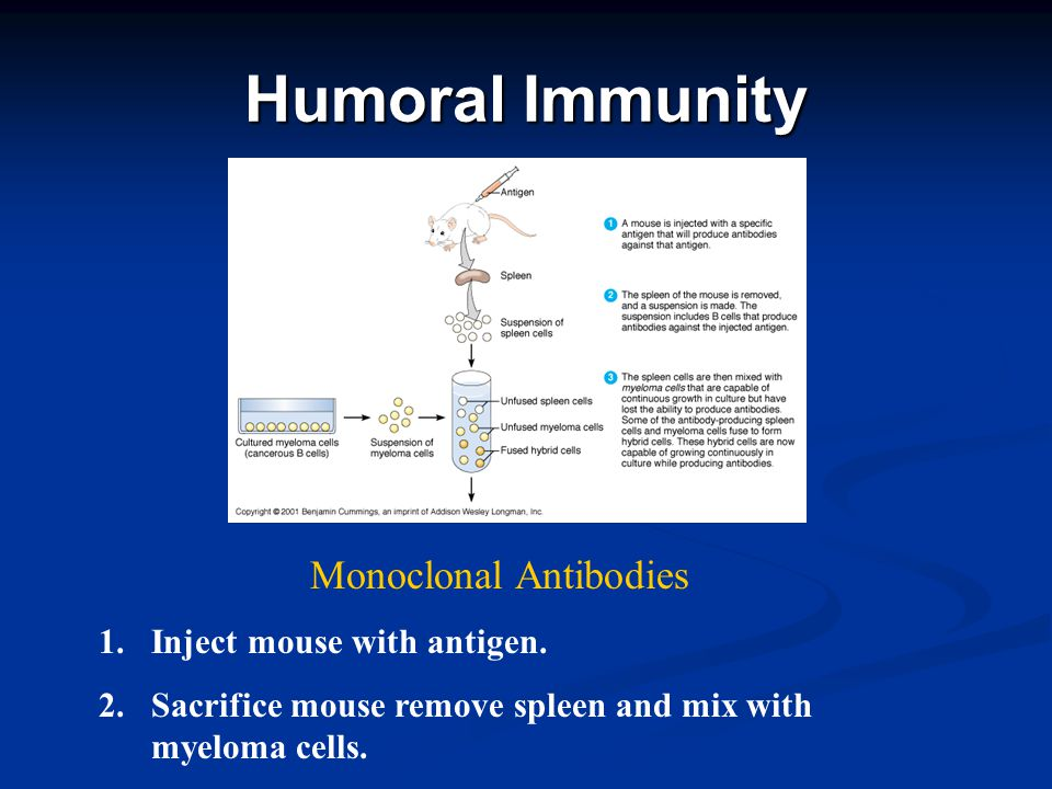 Humoral Immunity Monoclonal Antibodies 1. 1.Inject mouse with antigen.