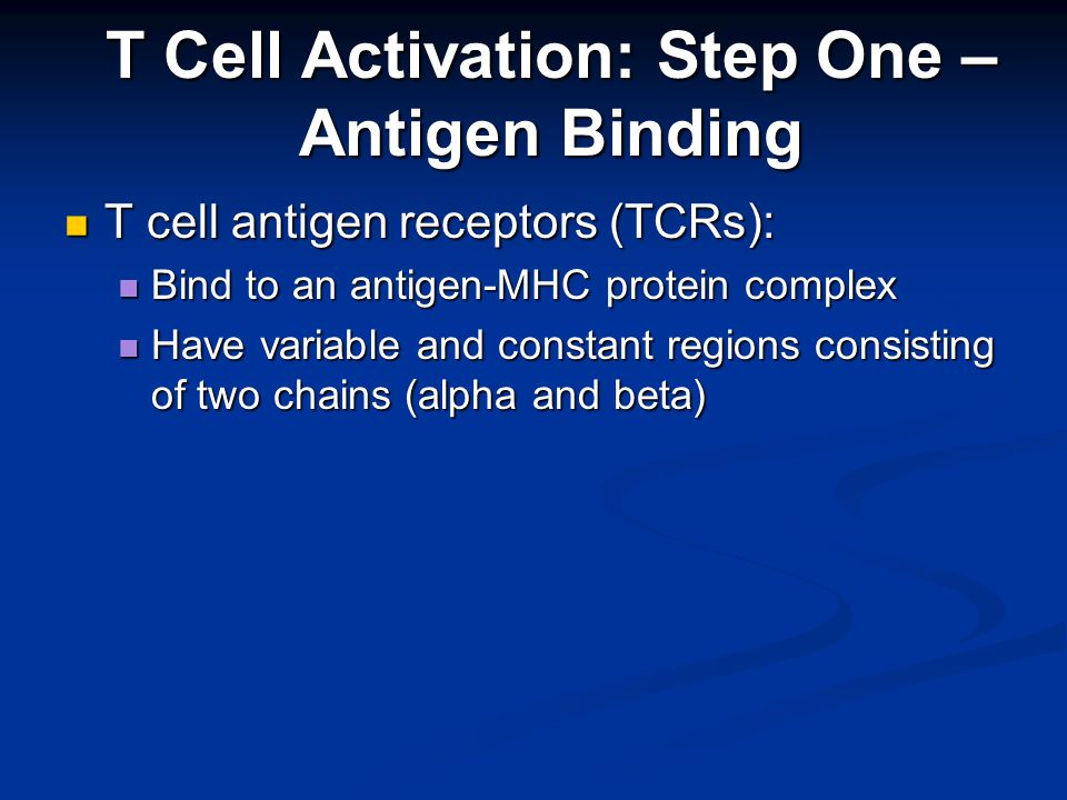 T cell antigen receptors (TCRs): T cell antigen receptors (TCRs): Bind to an antigen-MHC protein complex Bind to an antigen-MHC protein complex Have variable and constant regions consisting of two chains (alpha and beta) Have variable and constant regions consisting of two chains (alpha and beta) T Cell Activation: Step One – Antigen Binding