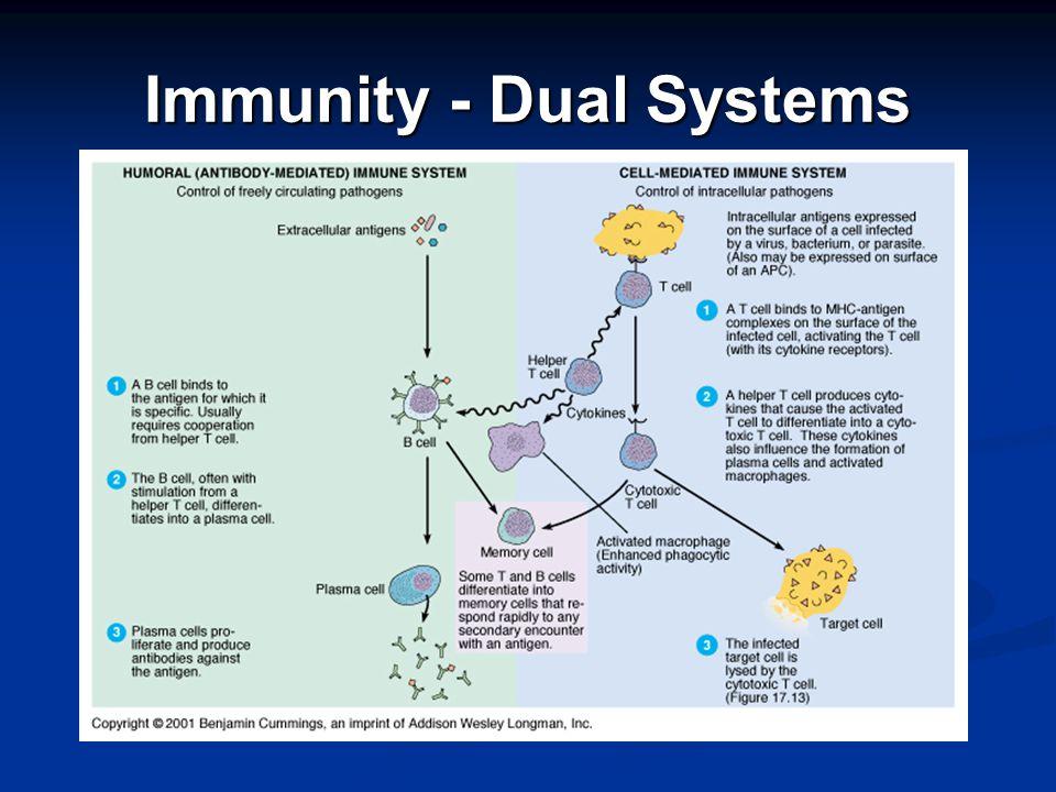 Immunity - Dual Systems