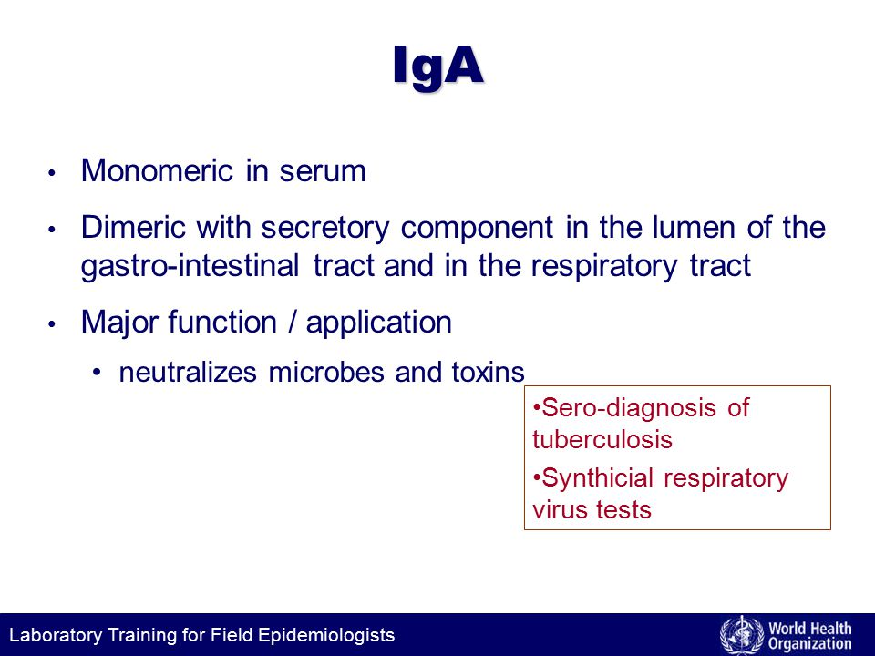 Laboratory Training for Field EpidemiologistsIgA Monomeric in serum Dimeric with secretory component in the lumen of the gastro-intestinal tract and in the respiratory tract Major function / application neutralizes microbes and toxins Sero-diagnosis of tuberculosis Synthicial respiratory virus tests