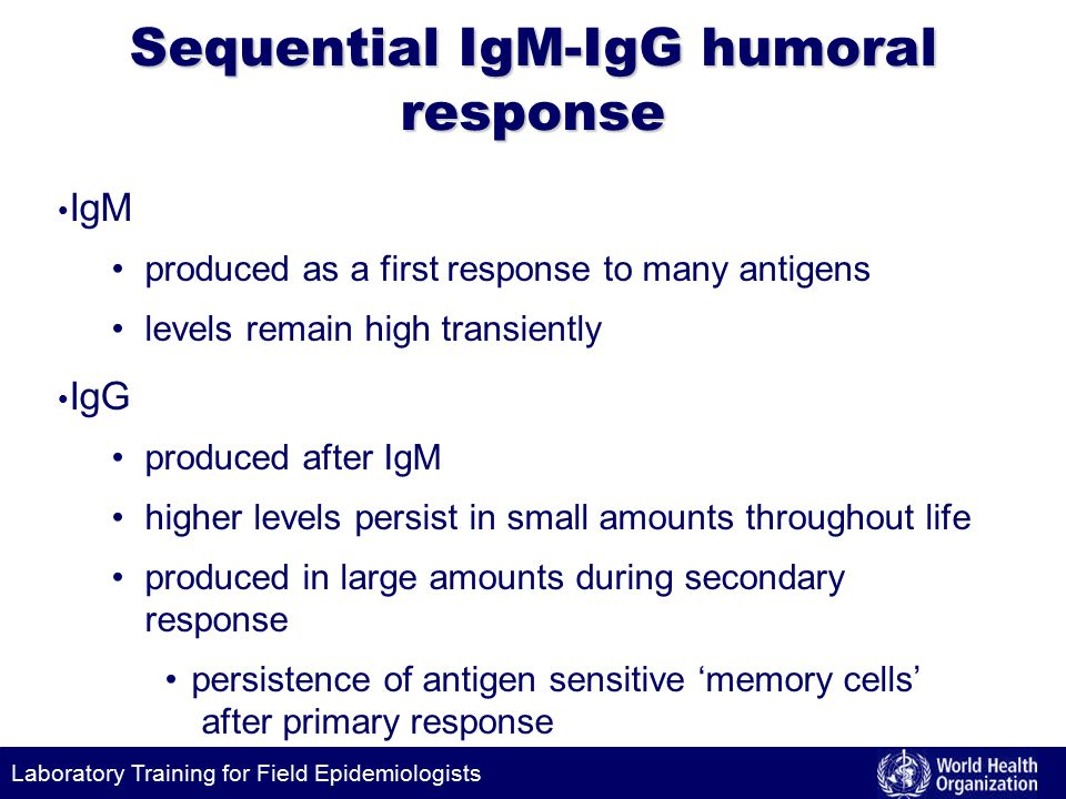 Laboratory Training for Field Epidemiologists Sequential IgM-IgG humoral response IgM produced as a first response to many antigens levels remain high transiently IgG produced after IgM higher levels persist in small amounts throughout life produced in large amounts during secondary response persistence of antigen sensitive 'memory cells' after primary response