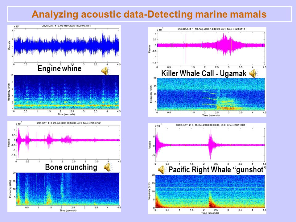Engine whine Killer Whale Call - Ugamak Bone crunching Pacific Right Whale gunshot Analyzing acoustic data-Detecting marine mamals