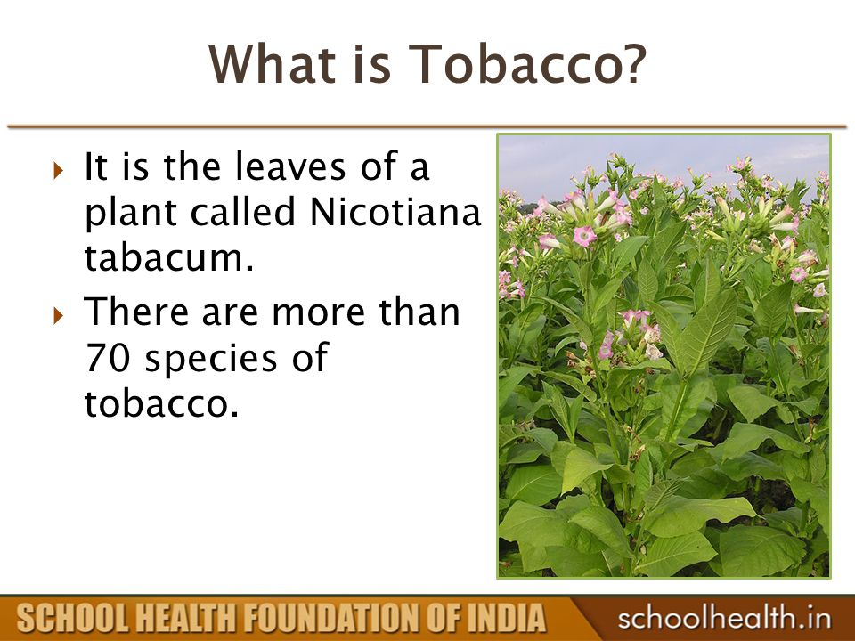 What is Tobacco.  It is the leaves of a plant called Nicotiana tabacum.