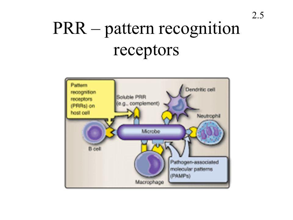 PRR – pattern recognition receptors 2.5