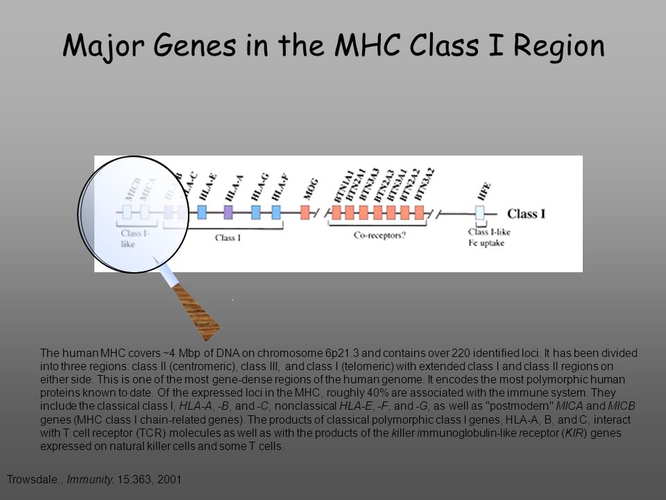 Gene Structure of the Human MHC Trowsdale., Immunity.
