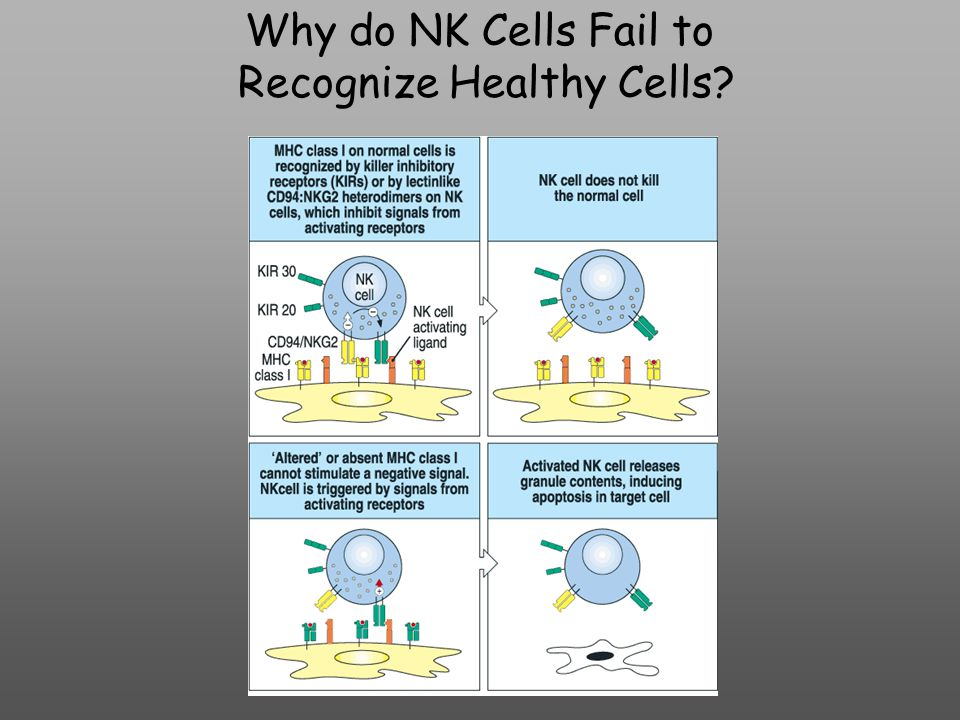 Why do NK Cells Fail to Recognize Healthy Cells