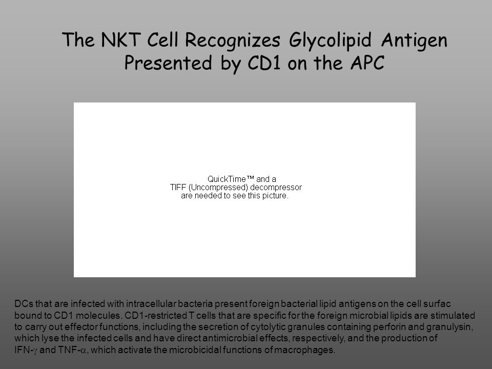 The NKT Cell Recognizes Glycolipid Antigen Presented by CD1 on the APC DCs that are infected with intracellular bacteria present foreign bacterial lipid antigens on the cell surfac bound to CD1 molecules.