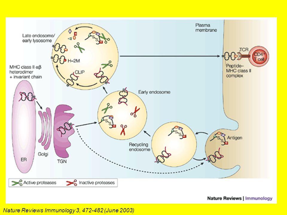 Nature Reviews Immunology 3, 472-482 (June 2003)