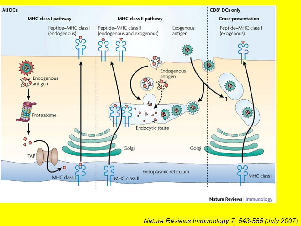 Nature Reviews Immunology 7, 543-555 (July 2007)