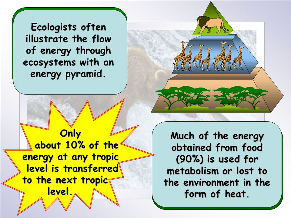 Ecologists often illustrate the flow of energy through ecosystems with an energy pyramid. Much of the energy obtained from food (90%) is used for meta