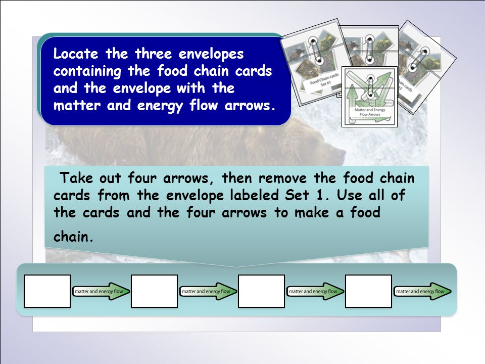Locate the three envelopes containing the food chain cards and the envelope with the matter and energy flow arrows. Take out four arrows, then remove