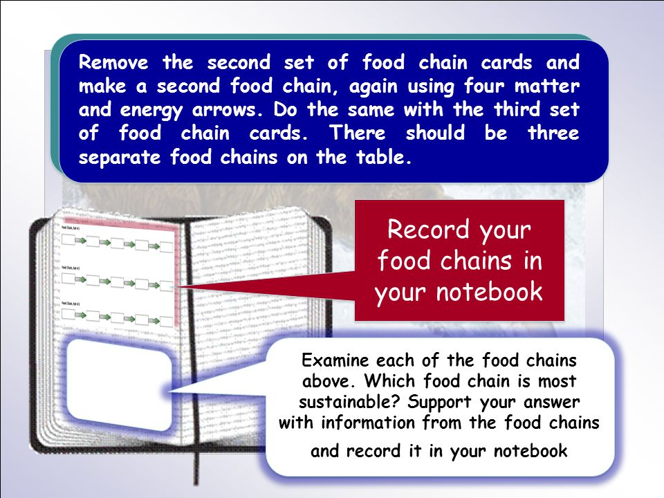 Remove the second set of food chain cards and make a second food chain, again using four matter and energy arrows. Do the same with the third set of f
