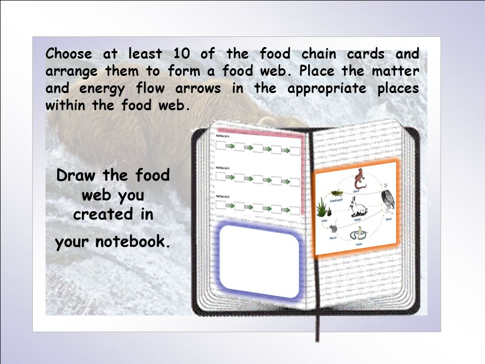 Choose at least 10 of the food chain cards and arrange them to form a food web.