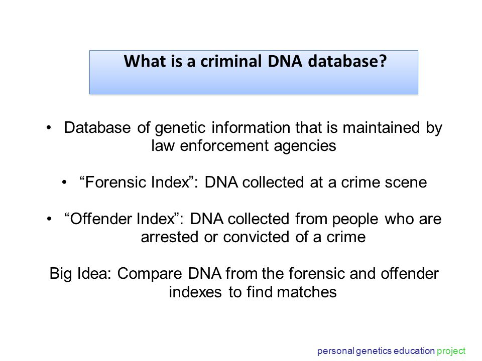 personal genetics education project Database of genetic information that is maintained by law enforcement agencies Forensic Index : DNA collected at a crime scene Offender Index : DNA collected from people who are arrested or convicted of a crime Big Idea: Compare DNA from the forensic and offender indexes to find matches What is a criminal DNA database?