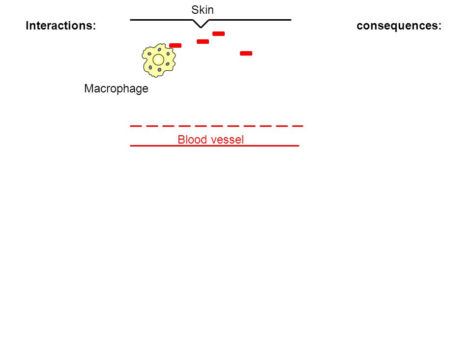 Blood vessel Skin Interferon (another cytokine) induced by viral infection: Interferon induce a state of resistance to viral replication in all cells IFN-α and IFN-β induce the expression of proteins that help to inhibit viral replication Autocrine and paracrine effect Activate dentritic cells and macrophage