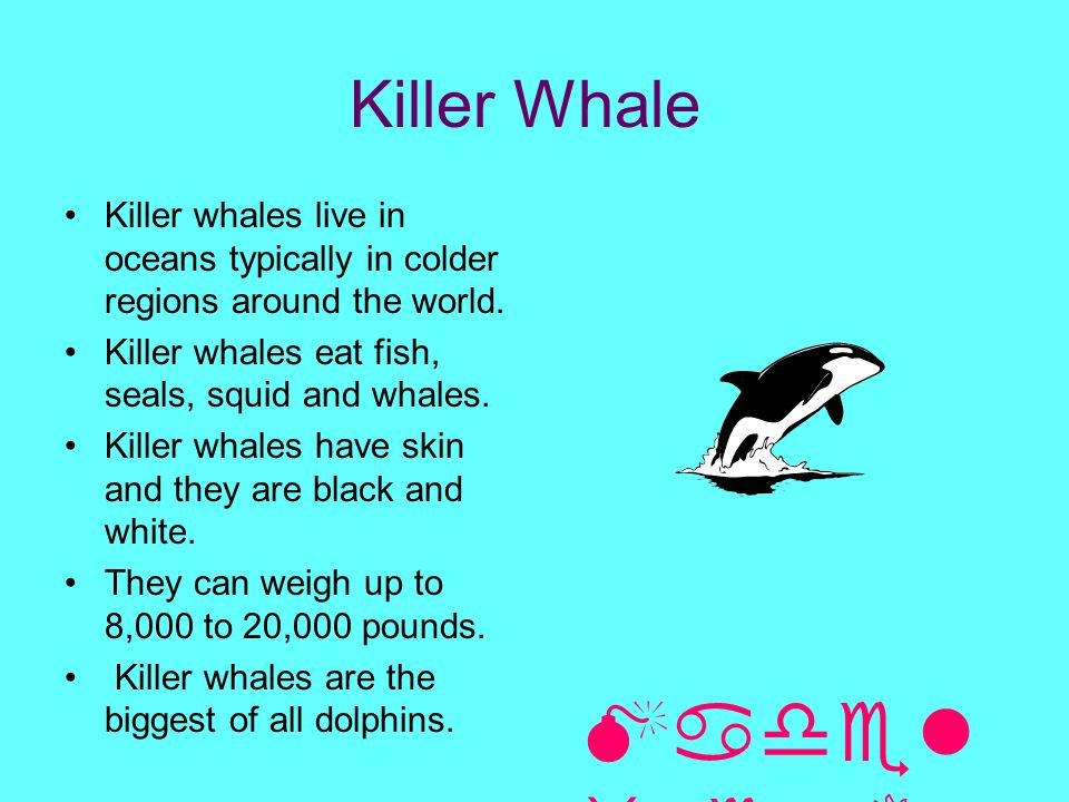 Killer Whale Killer whales live in oceans typically in colder regions around the world. Killer whales eat fish, seals, squid and whales. Killer whales