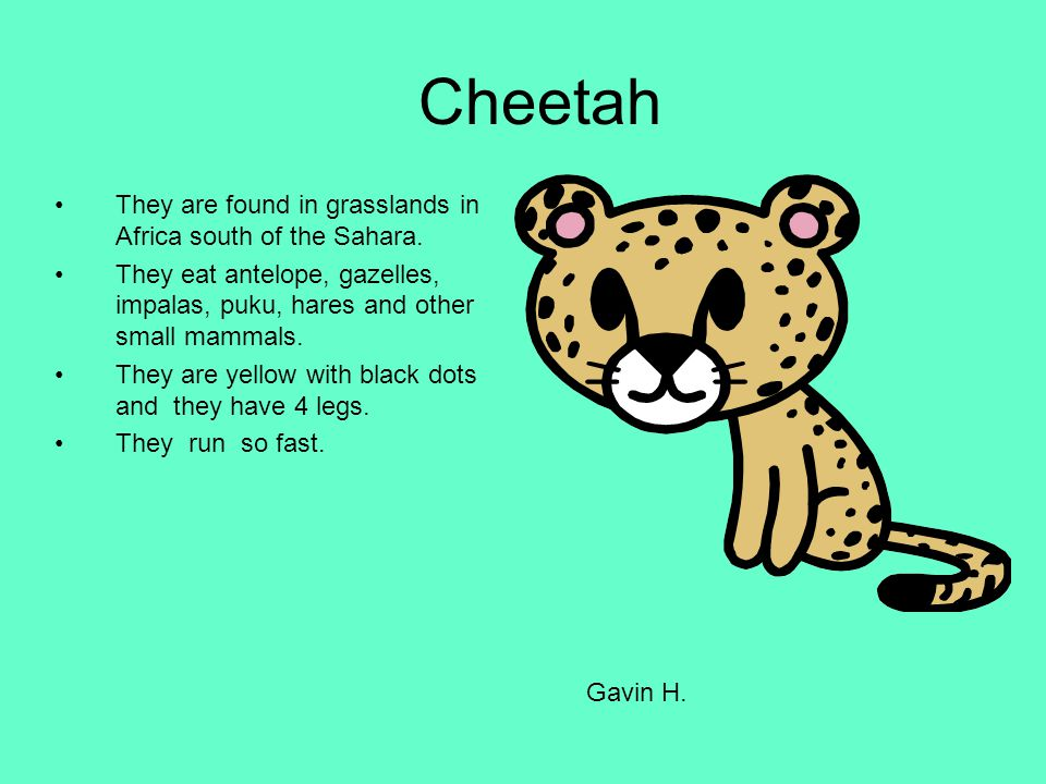 Cheetah They are found in grasslands in Africa south of the Sahara. They eat antelope, gazelles, impalas, puku, hares and other small mammals. They ar