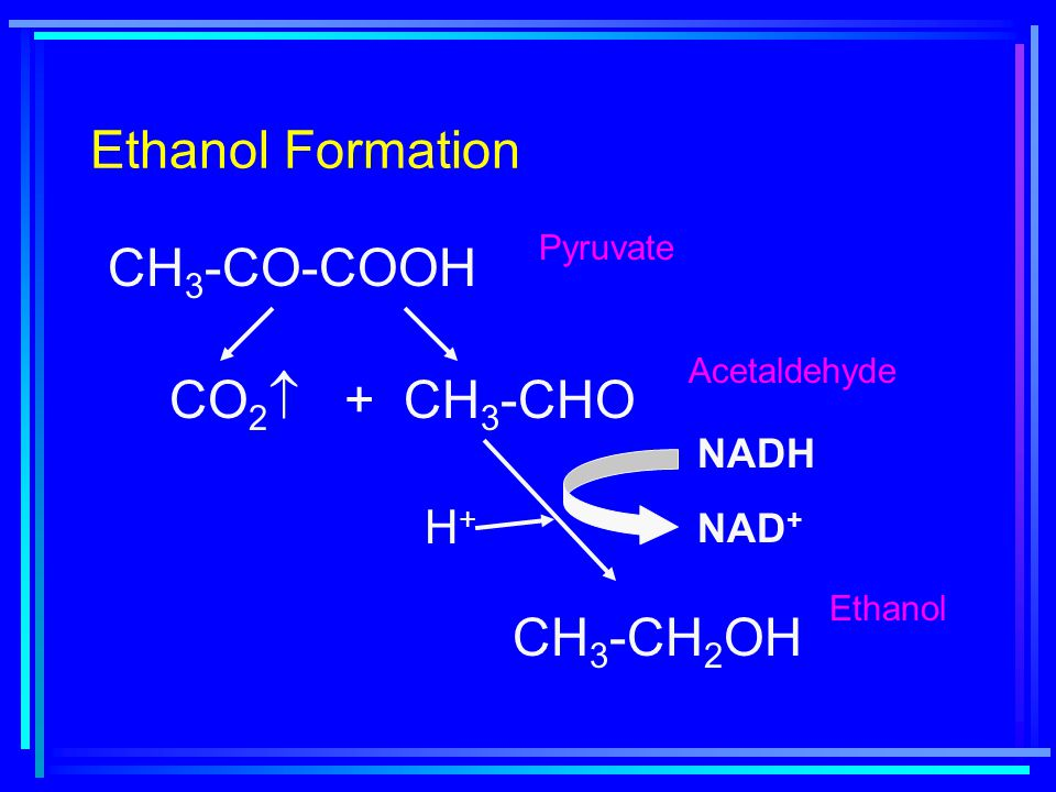 Ethanol Formation CH 3 -CO-COOH CO 2  + CH 3 -CHO CH 3 -CH 2 OH NADH NAD + H+H+ Pyruvate Acetaldehyde Ethanol