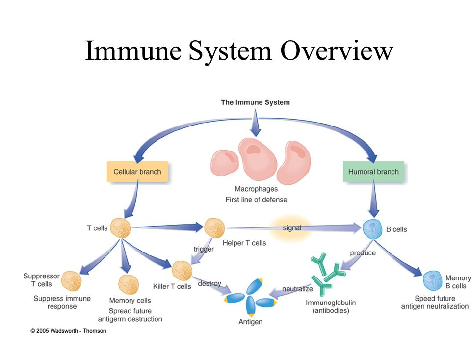 Immunity and Stress T cell