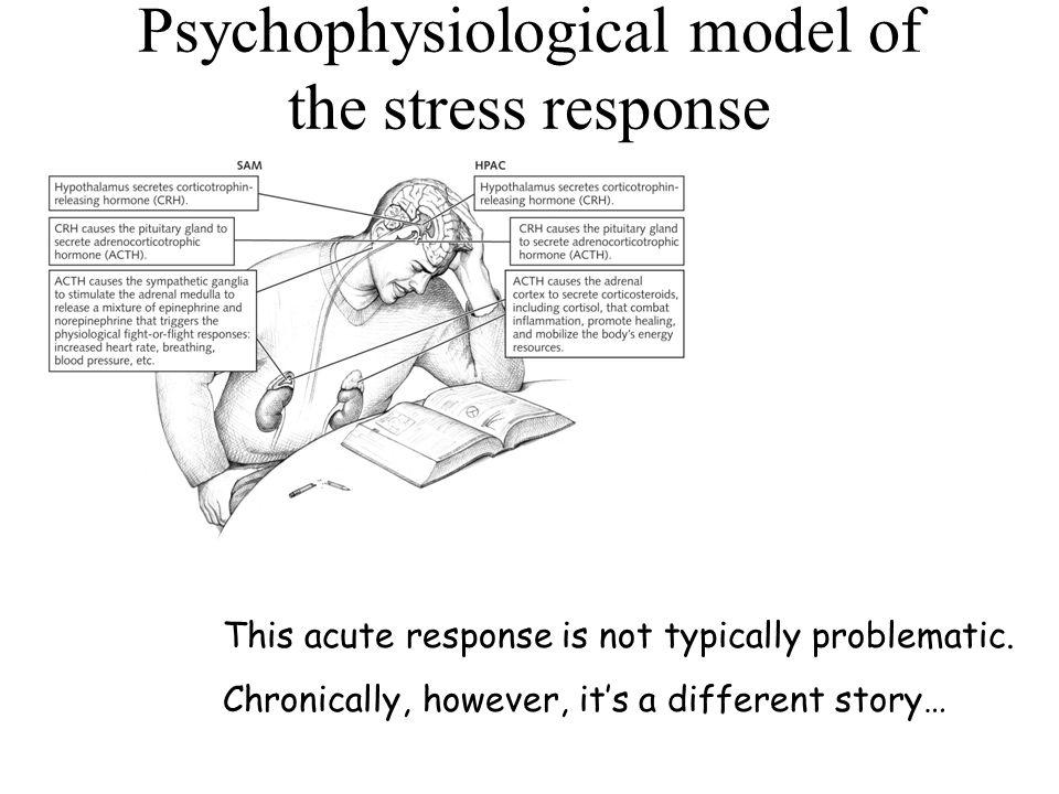 Psychophysiological model of the stress response