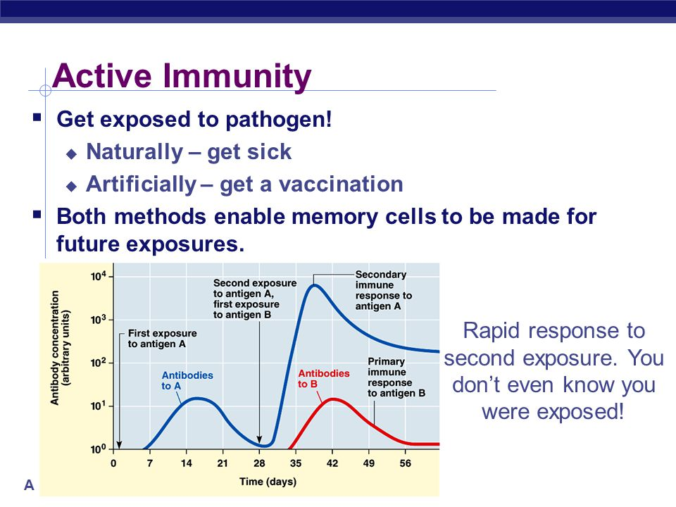 AP Biology Active Immunity  Get exposed to pathogen.