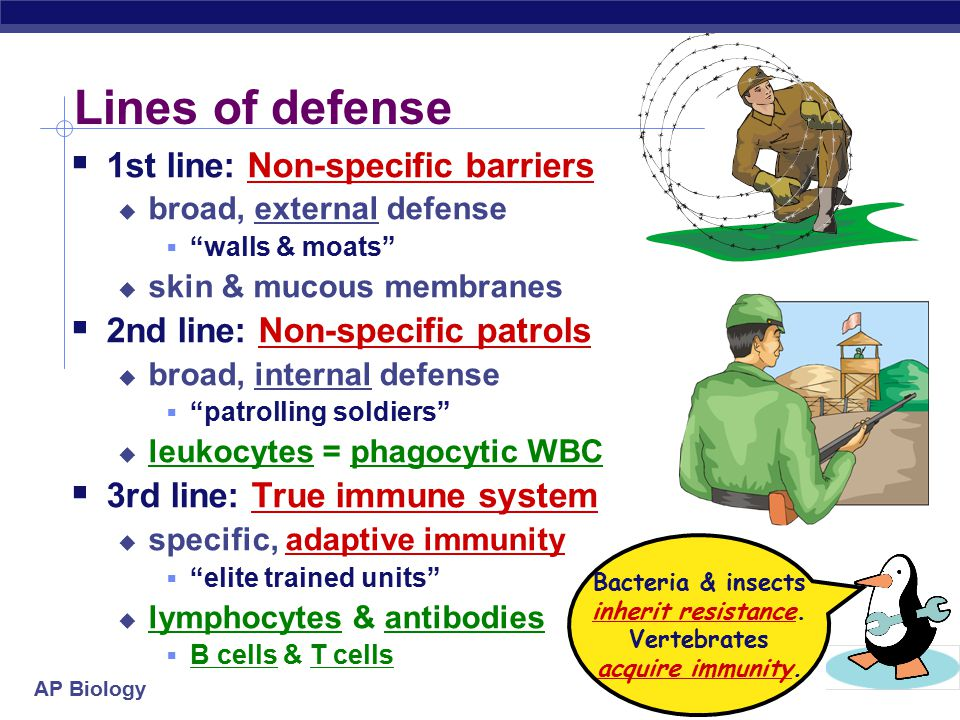 AP Biology Lines of defense  1st line: Non-specific barriers  broad, external defense  walls & moats  skin & mucous membranes  2nd line: Non-specific patrols  broad, internal defense  patrolling soldiers  leukocytes = phagocytic WBC  3rd line: True immune system  specific, adaptive immunity  elite trained units  lymphocytes & antibodies  B cells & T cells Bacteria & insects inherit resistance.