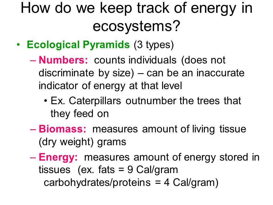 How do we keep track of energy in ecosystems.