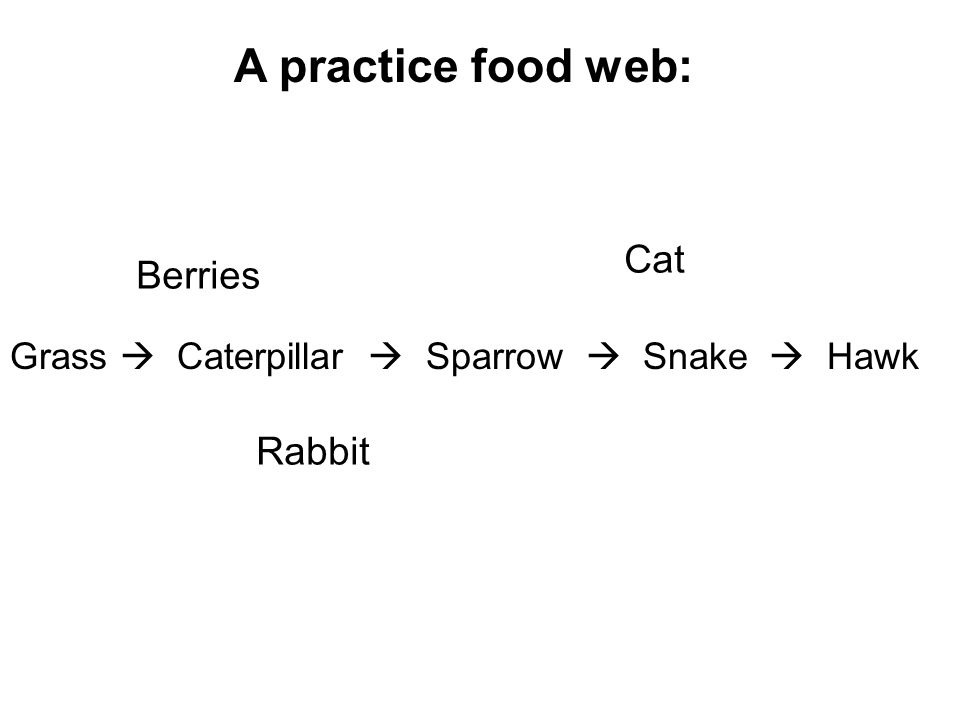 Grass  Caterpillar  Sparrow  Snake  Hawk Cat Rabbit Berries A practice food web: