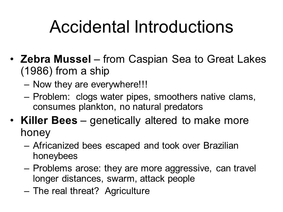 Accidental Introductions Zebra Mussel – from Caspian Sea to Great Lakes (1986) from a ship –Now they are everywhere!!.