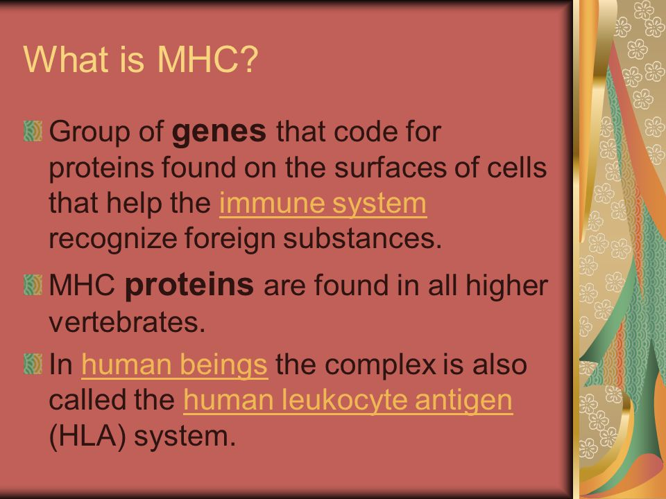 Conclusion Class I and II The class I and II MHC proteins also perform the important function of antigen presentation.