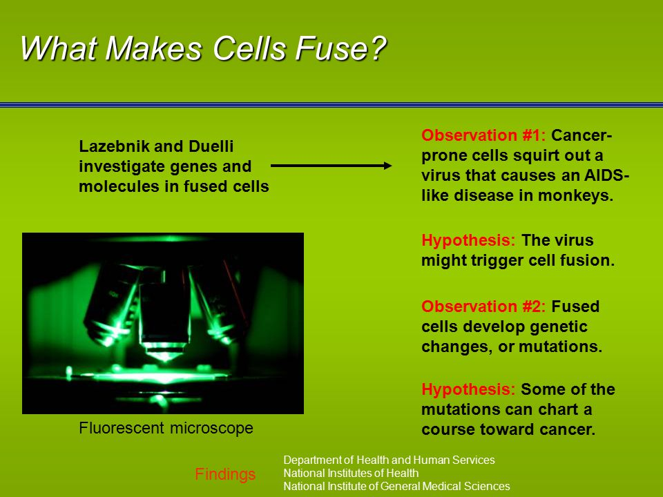 Findings Department of Health and Human Services National Institutes of Health National Institute of General Medical Sciences What Makes Cells Fuse? F