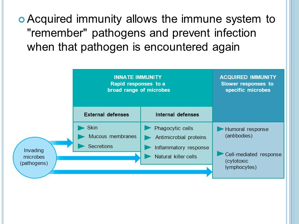 Acquired immunity allows the immune system to