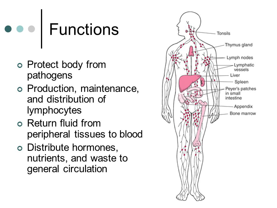 Functions Protect body from pathogens Production, maintenance, and distribution of lymphocytes Return fluid from peripheral tissues to blood Distribute hormones, nutrients, and waste to general circulation